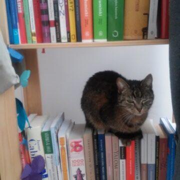 Jak znaleźć czas na czytanie książek – 6 okazji