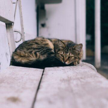 Dzień Lenia – dlaczego go potrzebujesz?